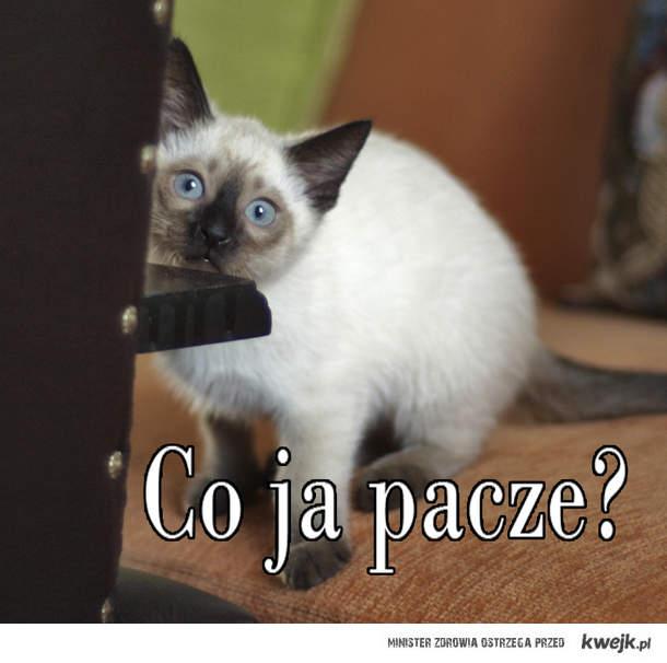 kot Ozzy też paczy