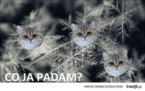 Padamy
