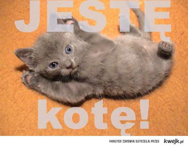 jeste-kote