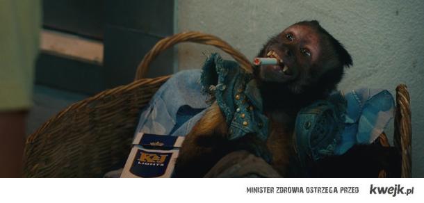 Małpka :))