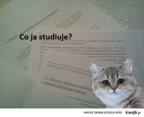 co ja studiuje