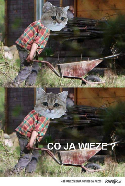 co ja wieze  ?