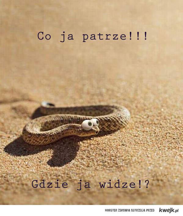 Wąż patrzy