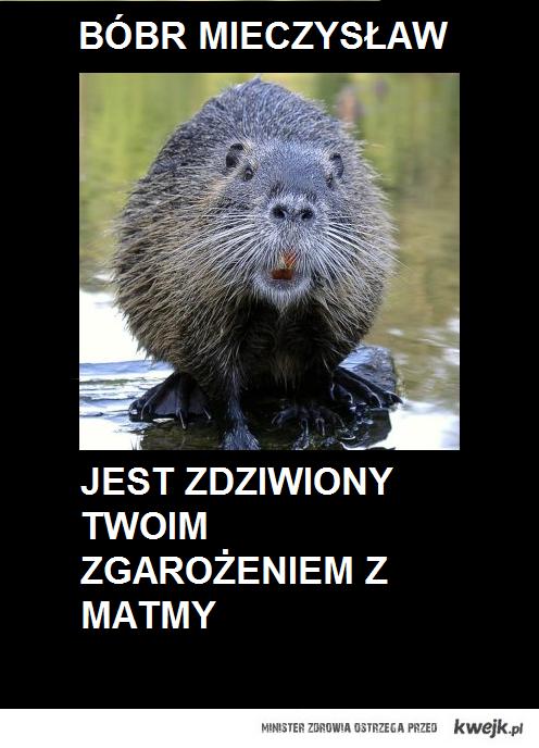 bóbr mieczysław