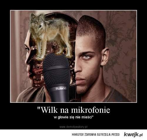 Wilk na mikrofonie