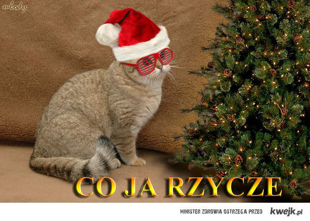 kot świąteczny