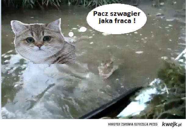PACZ SZWAGIER