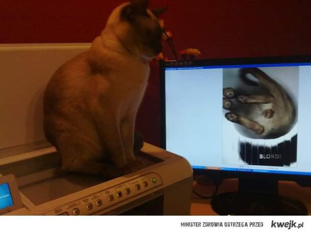 Niech to będzie przestroga dla wszystkich kotów !