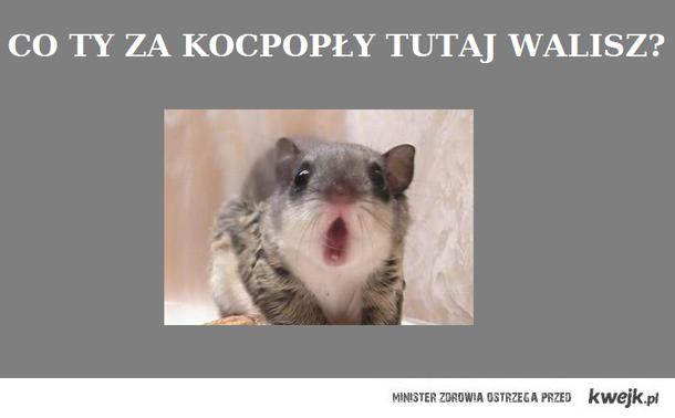 cozakocopoly