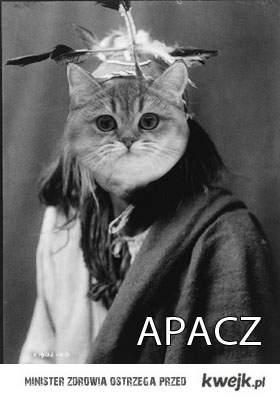 kot apacz