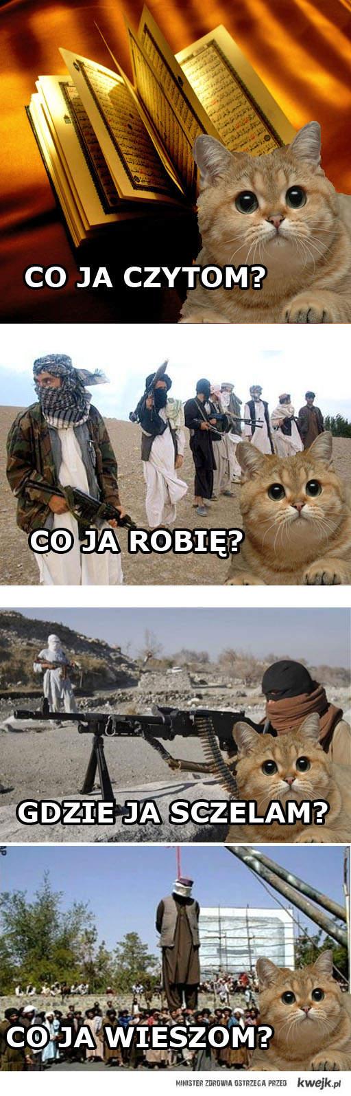 """kot """"co ja pacze"""" w afganistanie"""