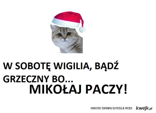 Kot-Mikołaj