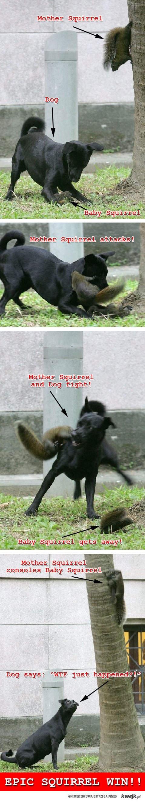 Mama wiewiórka