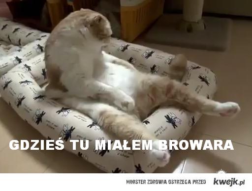 Zmęczony kot