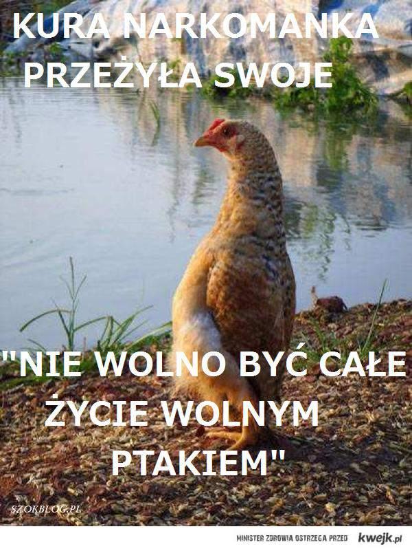 mądrości kury Izabeli.