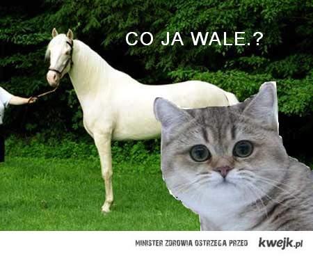 nawet kot wali