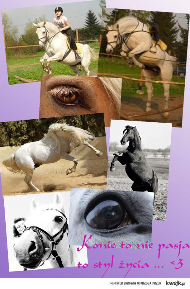 Konie to nie tylko pasja ...