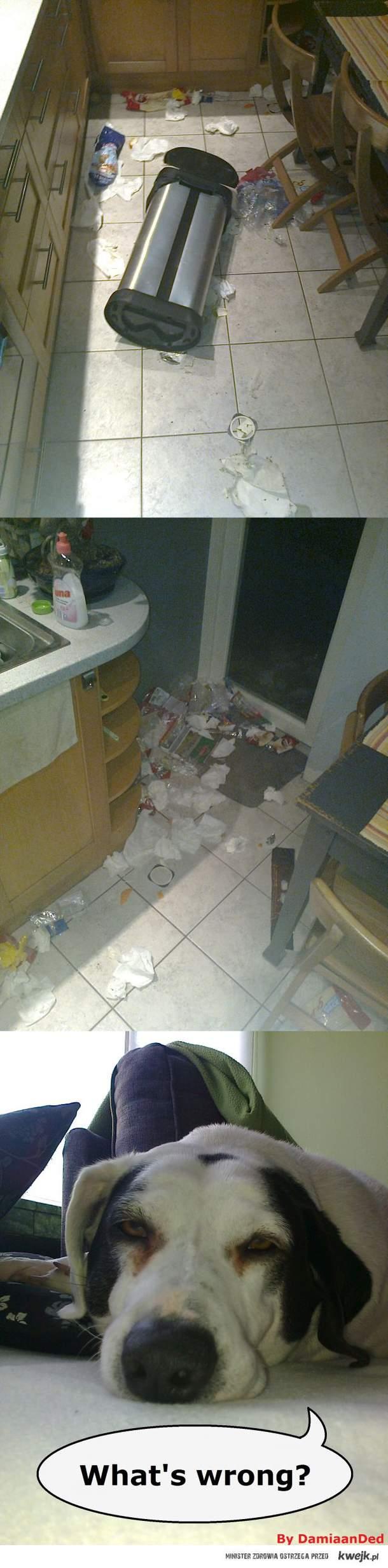niespodzianka od mojego psa