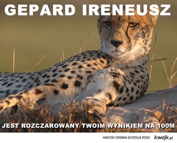Gepard Ireneusz