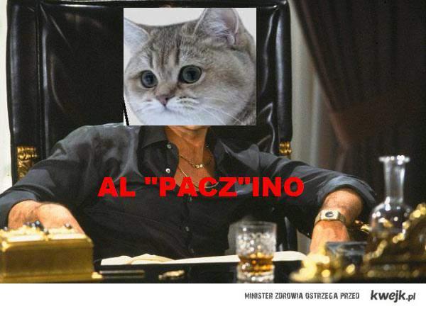 A Paczino