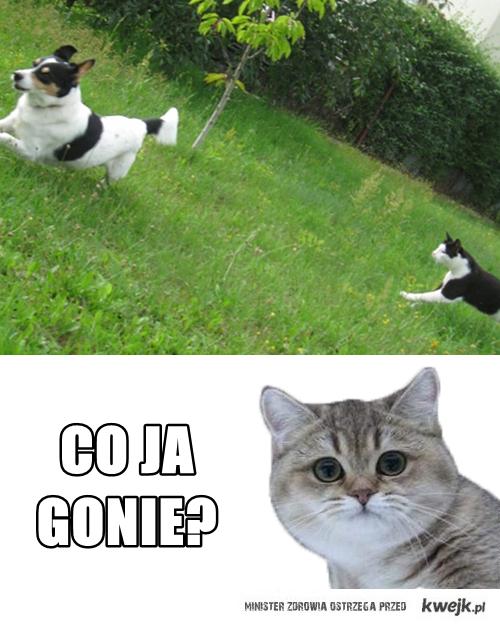 gonie