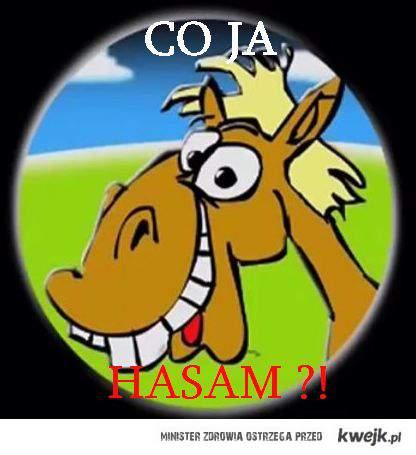 Koń rafal