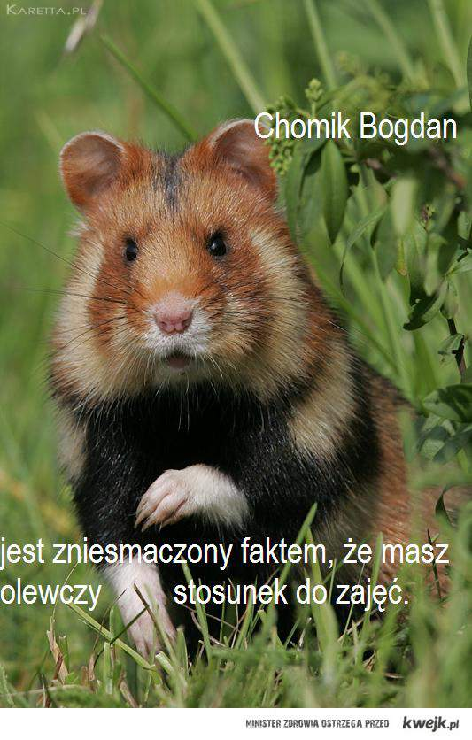 Chomik Bogdan...