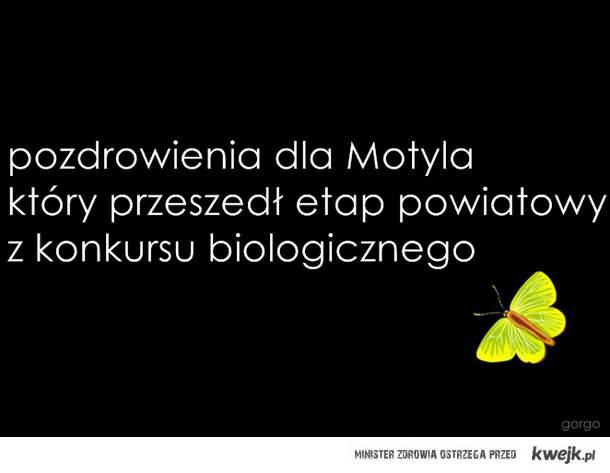Motyl ^^