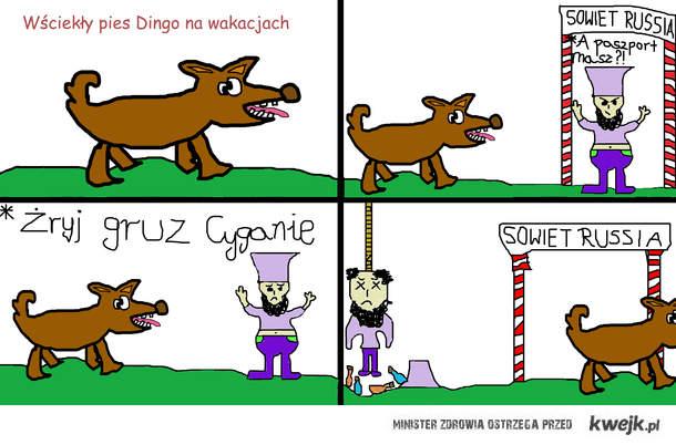 Pies Dingo na wakacjach