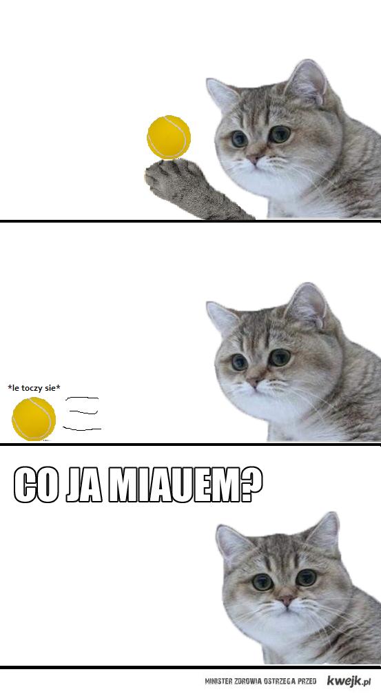 Co ja miauem?