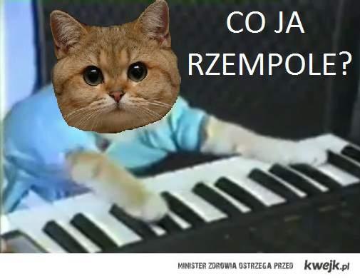keyboard starecat