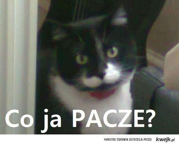 Mój kot paczy :D
