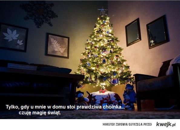 żywa choinka jest magią świąt.
