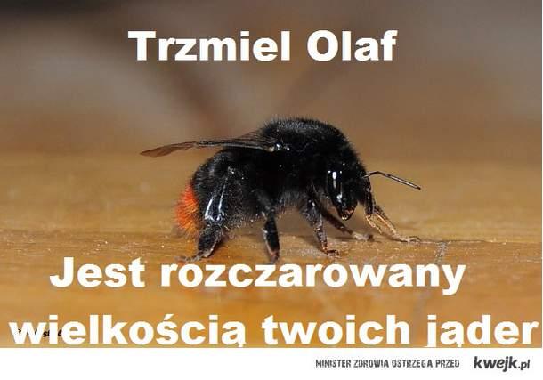 TrzmielOlaf