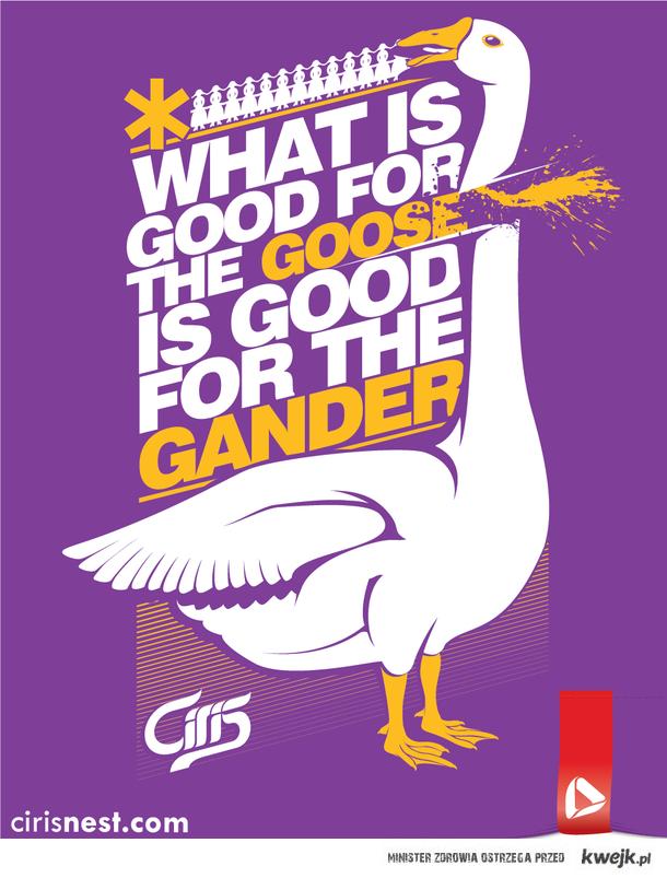 co jest dobre dla gęsi jest dobre dla gąsiora