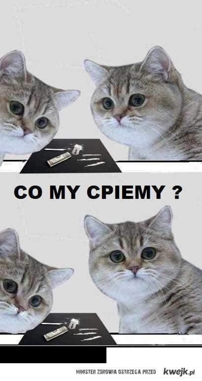 CO MY ĆPIEMY!