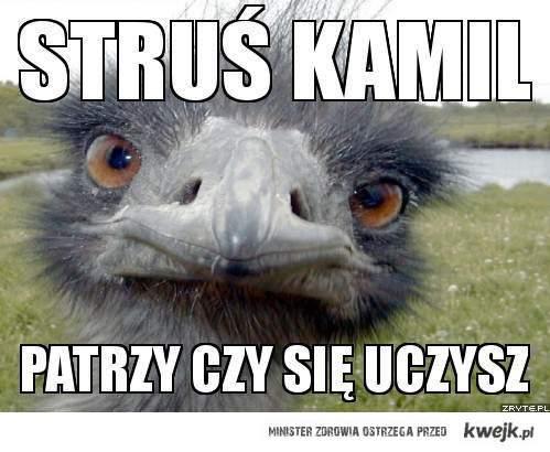 struś Kamil