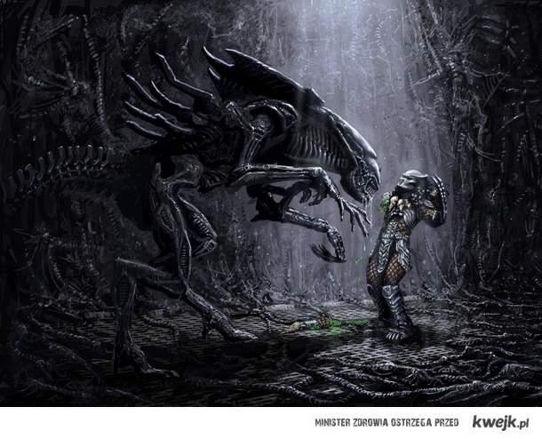 Królowa vs Predator