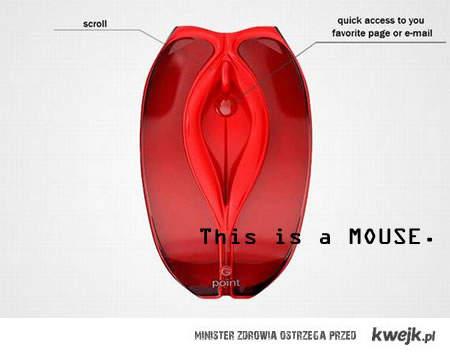 anatomia myszki