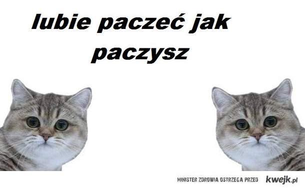 Paczysz pacze kot