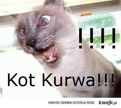 Kot Kurwa!!