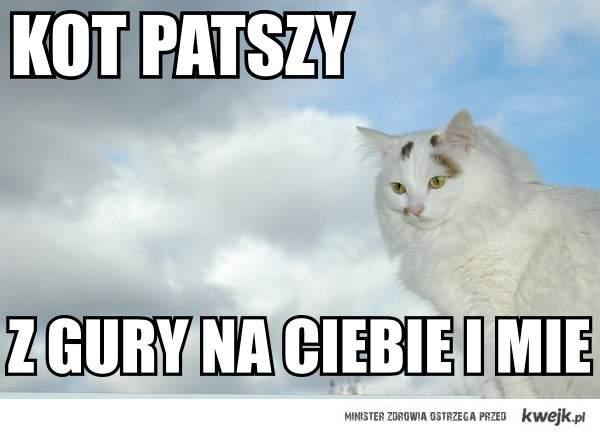 KOT_PATSZY