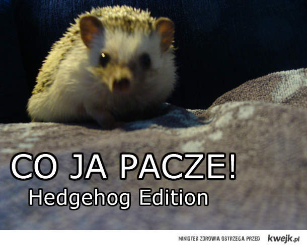 Hedgehog Edition