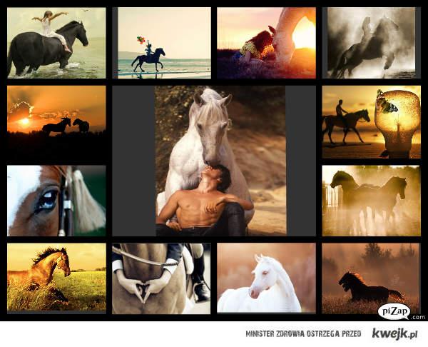 Koń to coś więcej niż zwierzę