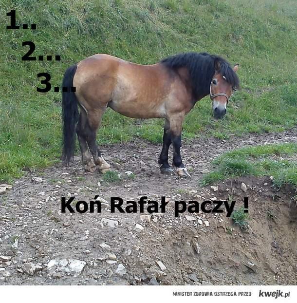 Koń Rafał ;p
