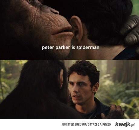 Parker is spiderman