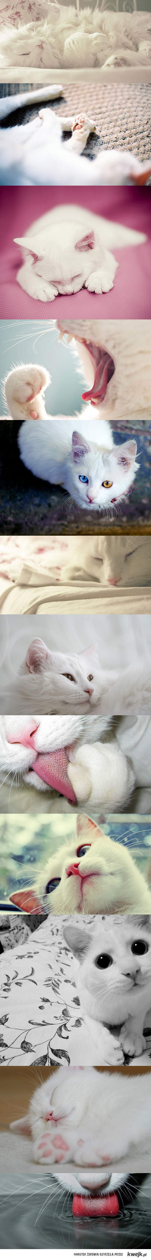 white cats <3