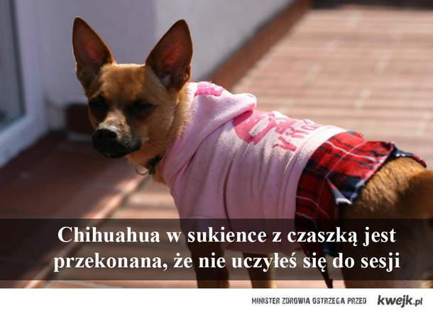 Pies w sukience z czaską