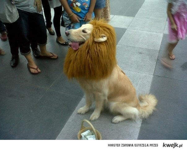 Zaufaj mi, jestem lwem