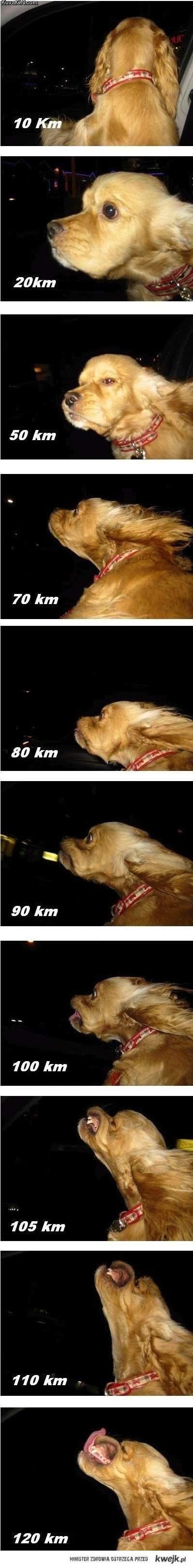 pies jako licznik